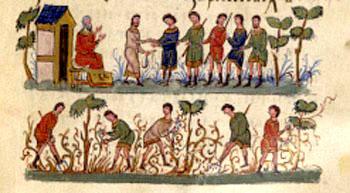 Risultati immagini per la parabola dei lavoratori della vigna